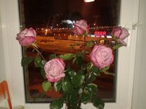 Roses. Three pink roses on the window-sill Stock Images