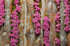 Roses on timber Stock Photos