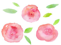 Roses tirées par la main d'aquarelle Photos stock
