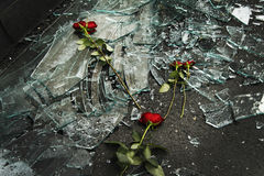 Roses on top of broken windows Stock Photography