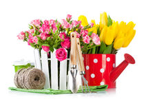 Roses and tulips with garden tools Stock Photos