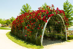 Roses tunnel. Garden Arbor with red roses, at the garden expo 2013 Stock Photos