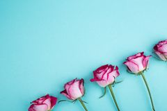Roses on turquois background. Bright roses, place for text stock image