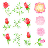 Roses & twig with leaves set Stock Photos