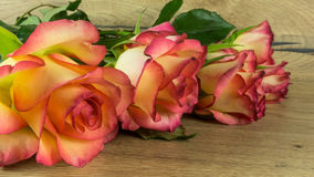 Roses in two colors as a background Royalty Free Stock Photography