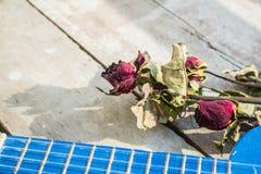 Roses and ukulele Stock Photography