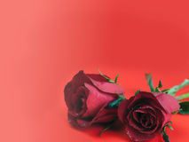 Roses on Valentine`s Day , Background. Royalty Free Stock Photography