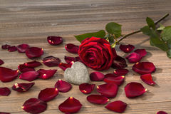 Roses for valentine's day and mother's day Stock Photos