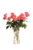 Roses In a Vase,. Photograph of pink roses ina vase shot in studio against a white background Royalty Free Stock Photo