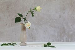 Roses in vase on old white background Stock Photos