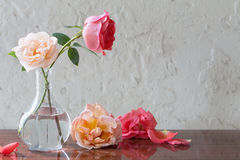 Roses in vase on old white background Stock Image