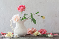 Roses in vase on old white background Royalty Free Stock Photos