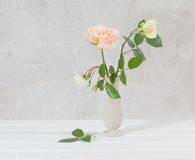 Roses in vase on old white background Royalty Free Stock Image