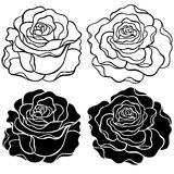Roses Vector Illustration. Roses Outlines and Silhouette Vector Illustration Stock Photo