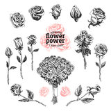 Roses vector set. Flower illustrations in sketch style. Hand drawn design elements stock illustration