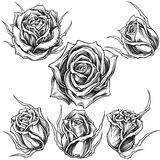 Roses vector set 01. Roses traditional inking line work. You guys can check the example what I use here vector illustration