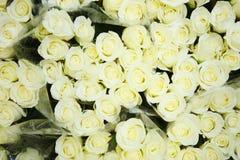 Roses vertes Photographie stock libre de droits
