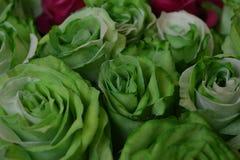 Roses vertes Photos stock