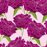 Roses vinicoles Photographie stock