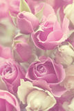 Roses Vintage Effect. Bunch of roses with a hazy vintage effect applied Royalty Free Stock Image