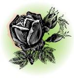 Roses vintage grunge design Stock Image