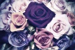 Roses - vintage look. Bunch of roses - vintage look royalty free stock photo