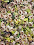 Roses on wall. A wall of roses as interior decoration Royalty Free Stock Photos
