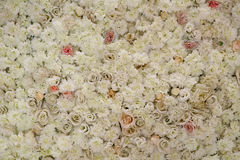 Roses on the wall. Lots of white roses fitted on the wall Royalty Free Stock Images