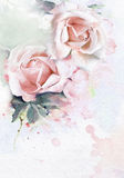 Roses watercolor background Royalty Free Stock Image
