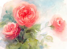 Roses Watercolor Flowers Illustration Hand Painted Stock Photography
