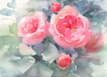 Roses Watercolor Flowers Illustration Hand Painted Royalty Free Stock Photo