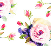 Roses, watercolor illustration. Watercolor illustration of beautiful flowers Royalty Free Stock Photography