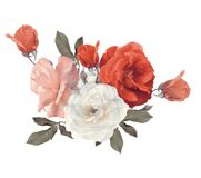 Roses watercolor on white background. Roses watercolor isolated on white background Stock Images