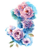 Roses watercolor sketch Royalty Free Stock Images