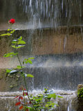 Roses and waterfalls Royalty Free Stock Images