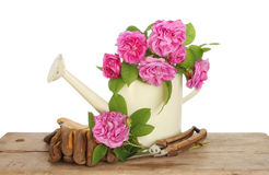 Roses and watering can Royalty Free Stock Photography