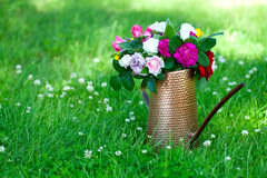 Roses in watering can standing on grass Royalty Free Stock Photo