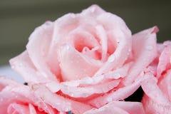 Roses at a Wedding. Pink Roses at a Wedding stock photography