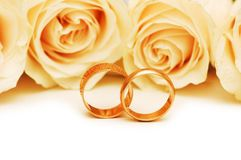 Roses and wedding rings. Isolated on the white Stock Photography