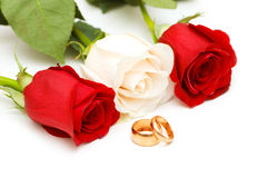 Roses and wedding rings isolated on white. Roses and wedding rings  isolated on white Royalty Free Stock Image