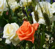 Roses and wheat Royalty Free Stock Photos
