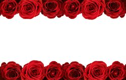 Roses on white Royalty Free Stock Photo
