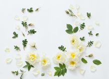 Roses on white background. The roses on white background Stock Photography