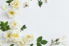 Roses on white background. The roses on white background Royalty Free Stock Photo