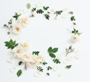 Roses on white background. The roses on white background Royalty Free Stock Images