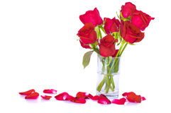 Roses with white background Stock Photos