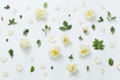 Roses on white background Royalty Free Stock Photos
