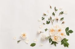 Roses on white background Royalty Free Stock Images
