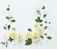Roses on white background Stock Photos