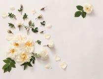 Roses on white background Royalty Free Stock Photo